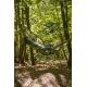 COLIBRI 3.0, Camo Forest (double)